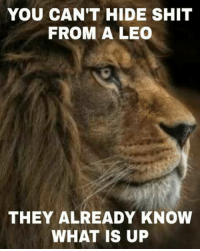 Shit, What Is, and Leo: YOU CAN'T HIDE SHIT  FROM A LEO  THEY ALREADY KNOW  WHAT IS UP #Leonians are #calm & #Observant... do not forget that!! 😂😂😂😂 #FieryLeo #Leotribe #ItsALeoThing #CourageousLeo 👇👇👇👇👇👇👇👇👇
