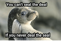 Sealing deals: You can't seal the deal  If you never deal the seal Sealing deals