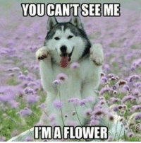 Memes, Flower, and Flowers: YOU CANT SEE ME  IMA FLOWER I'm a flower :)