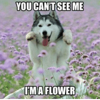 Memes, 🤖, and  Can't See: YOU CANT SEE ME  IRMA FLOWER http://t.co/IxSSSwqq0t
