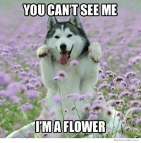I want to be a flower! Except I do not want to be stuck in a vase full of water, that is too much like taking a baff. BOL!: YOU CANT SEEME  IMA  FLOWER  We Know Memes I want to be a flower! Except I do not want to be stuck in a vase full of water, that is too much like taking a baff. BOL!