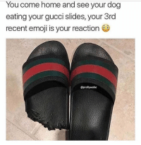 Emoji, Gucci, and Memes: You come home and see your dog  eating your gucci slides, your 3rd  recent emoji is your reaction  @prollywoke How you reacting? 🤔😂😂