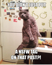 Can we make it a new meme?: YOU DIDNT JUST PUT  A NSFW TAG  ON THAT POST Can we make it a new meme?