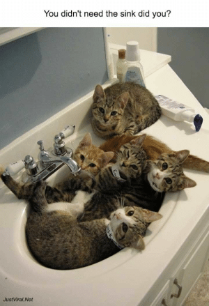 Funny, Animal, and Images: You didn't need the sink did you?  JustViral.Net  ega 45 Funny Animal Images You Won't Be Able to Stop Laughing at - JustViral.Net
