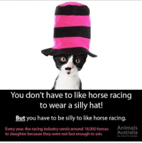 happy melbourne cup day hope u had fun gambling on helpless animals xo: You don't have to like horse racing  to wear a silly hat!  But you have to be silly to like horse racing  Every year, the racing industry sends around 18,000 horses Animals  Australia  to slaughter because they were not fast enough to win.  the valce for anlmal happy melbourne cup day hope u had fun gambling on helpless animals xo