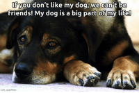 Anyone else feel this way?: you don't like my dog, we can't be  friends! My dog is a big part of my life!  talli up flickr Anyone else feel this way?