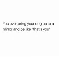 "Be Like, Memes, and Mirror: You ever bring your dog up toa  mirror and be like ""that's you"" woa 🤯 @thebasicbitchlife"