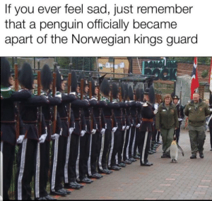 1# protection: you ever feel sad, just remember  that a penguin officially became  apart of the Norwegian kings guard  If 1# protection
