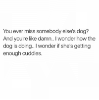 Tbh, 🖕 my ex's dog. Little thing was the spawn of @satan 😂😂: You ever miss somebody else's dog?  And you're like damn.. I wonder how the  dog is doing.. I wonder if she's getting  enough cuddles. Tbh, 🖕 my ex's dog. Little thing was the spawn of @satan 😂😂