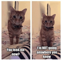 You feed me  now?  Im NOT going  anywhere you  know