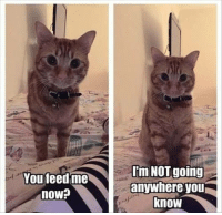 feed me: You feed me  rm NOT going  anywhere you  now?  know