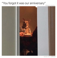 "Funny, How, and Tank: ""You forgot it was our anniversary""  @tank.sinatra  MADE WITH MOMUS How could you"