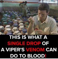 Chemical reaction of Viper venom!  #onedip: You  FragranceMad.com  FACTS  THIS IS WHAT A  OF  SINGLE DROP  VENOM  A VIPER'S  CAN  DO TO BLOOD Chemical reaction of Viper venom!  #onedip