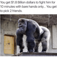 Friends, Memes, and Fight: You get $1.8 Billion dollars to fight him for  10 minutes with bare hands only... You get  to pick 2 friends Tag your 2 friends 😂🦍