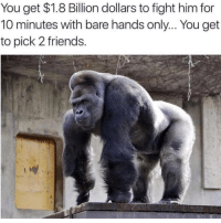 Friends, Lol, and Memes: You get $1.8 Billion dollars to fight him for  10 minutes with bare hands only... You get  to pick 2 friends. Tag them lol