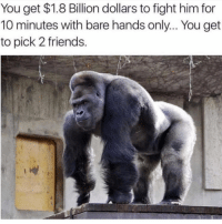 Friends, Memes, and Fight: You get $1.8 Billion dollars to fight him for  10 minutes with bare hands only... You get  to pick 2 friends. Who squaring up?