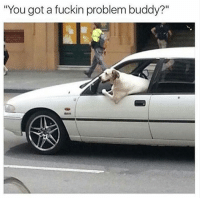 """Funny, Animal, and Cool: """"You got a fuckin problem buddy? 22 Cool Animal Pictures From This Week That Are Actually Funny"""