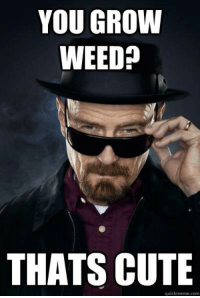 Breaking bad love it ~BANE~: YOU GROW  WEED  THATS CUTE  quickmeme com Breaking bad love it ~BANE~