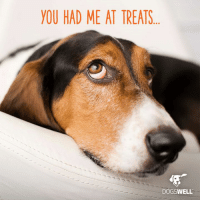 Memes, 🤖, and Dog: YOU HAD ME AT TREATS  DOGSWELL Never tried Dogswell treats? Let's fix that. Comment below and tell us about your dog(s) for a chance to win a free bag!