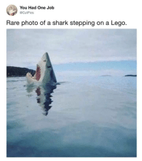 Lego, Memes, and Spanish: You Had One Job  @CutPics  Rare photo of a shark stepping on a Lego. <p>*screams in Spanish*</p><p><b><i>You need your required daily intake of memes! Follow <a>@nochillmemes</a> for help now!</i></b><br/></p>