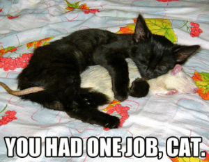 Not exactly what you're supposed to do …: YOU HAD ONEJOB, CAT. Not exactly what you're supposed to do …