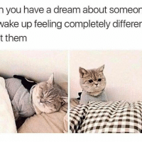 Memes, 🤖, and Dream: you have a dream about someon  wake up feeling completely differer  t them 😑😑