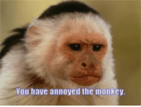 Monky: You have annoyed the monkey.