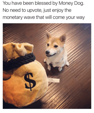 me irl: You have been blessed by Money Dog  No need to upvote, just enjoy the  monetary wave that will come your way me irl