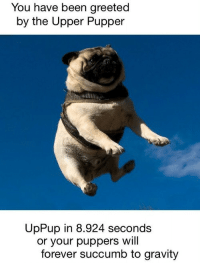 <p>fly pupper fly</p>: You have been greeted  by the Upper Pupper  UpPup in 8.924 seconds  or your puppers will  forever succumb to gravity <p>fly pupper fly</p>