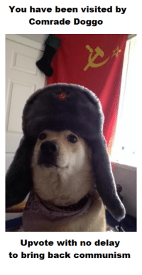 "Dank, Meme, and Good: You have been visited by  Comrade Doggo  Upvote with no delay  to bring back communism <p>Good doggo via /r/dank_meme <a href=""http://ift.tt/2hVd1ue"">http://ift.tt/2hVd1ue</a></p>"