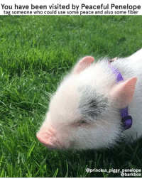 Memes, Thank You, and Princess: You have been visited by Peaceful Penelope  tag someone who could use some peace and also some fiber  princess_piggypenelope  barkbox THANK YOU FOR GRACING US WITH YOUR CALMING PRESENCE AND COLON-CLEANSING FIBER, @princess_piggy_penelope 🙏🐷🙏 AT THAT FRIEND WHO DEF HASN'T EATEN A PLANT TODAY 🐖 GLANCE AT A PIG 🐖 LIKE A PIG 🐖 FOLLOW A PIG AND PROBS US 🐖 HUG A ❗️CONSENTING❗️ PIG pigsofinstagram pigs zen mukbang asmreating grass omnomnom 🐖