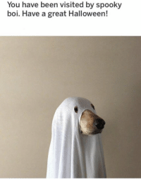 Halloween, Memes, and Spooky: You have been visited by spooky  boi. Have a great Halloween! https://t.co/1Qckkn84cY
