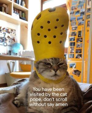 You Have Been Visited By: You have been  visited by the cat  pope, don't scroll  without say amen