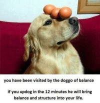 Life, Mind, and Peace: you have been visited by the doggo of balance  if you updog in the 12 minutes he will bring  balance and structure into your life. This little guy has the potential to bring you some peace of mind.