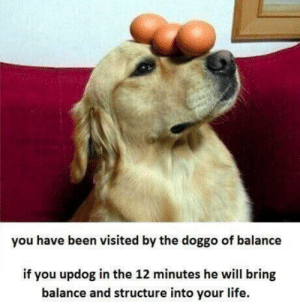 meirl: you have been visited by the doggo of balance  if you updog in the 12 minutes he will bring  balance and structure into your life. meirl