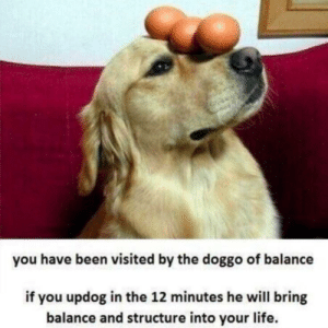 The doggo of balance is here!: you have been visited by the doggo of balance  if you updog in the 12 minutes he will bring  balance and structure into your life. The doggo of balance is here!
