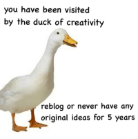 Duck: you have been visited  by the duck of creativity  reblog or never have any  original ideas for 5 years