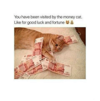 Memes, Money, and Good: You have been visited by the money cat.  Like for good luck and fortune