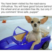 "You have been visited by the road-savvy  chihuahua. You will have good fortune behind  the wheel and an accident-free life, but only if  you comment ""drive safe, pupper"" Drive safe pupper Follow our backup: @aztistic dankmemes autism cringe meme memes autistic nicememe lmao lol jetfuelcantmeltsteelbeams kek lmfao immortalmemes filthyfrank 4chan ayylmao weeaboo anime vaporwave wtf fnaf realnigga realniggahours bushdid911 myniggas johncena papafranku edgy mlg kidzbop"