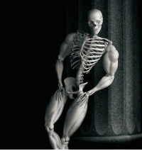 You have been visited by the swole skeleton: You have been visited by the swole skeleton