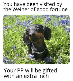 Big PP for all! by ForPeace27 MORE MEMES: You have been visited by  the Weiner of good fortune  Your PP will be gifted  with an extra inch Big PP for all! by ForPeace27 MORE MEMES