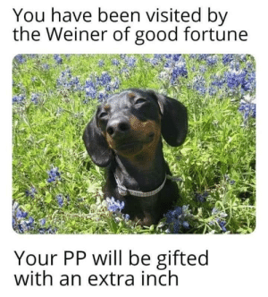 REJOICE ON THIS BLESSED DAY: You have been visited by  the Weiner of good fortune  Your PP will be gifted  with an extra inch REJOICE ON THIS BLESSED DAY