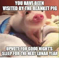 Memes, Tumblr, and Blog: YOU HAVEBEEN  VISITED BYTHE BLANKET PIG  UPVOTE FORGOOD NIGHTS  SLEEP NEXI LUNARYEAR  FORTHE positive-memes:  Happy Year of Pig To Everyone!