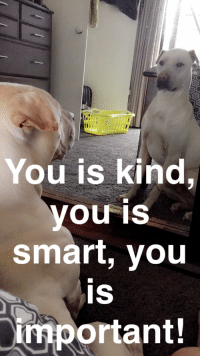 You Is Kind You Is Smart: You is kind,  you is  smart, you  IS  important!