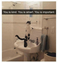You Is Kind You Is Smart You Is Important: You is kind. You is smart. You is important.