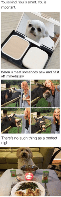 animalsnaps:Animal posts: You is kind. You is smart. You is  important.   When u meet somebody new and hit it  off immediately   There's no such thing as a perfect  nigh- animalsnaps:Animal posts