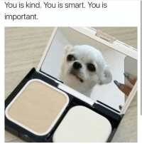 You is beautiful . 🔀(@animal__meme ): You is kind. You is smart. You is  important. You is beautiful . 🔀(@animal__meme )