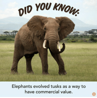 Dank, Elephants, and 🤖: yOU KNOW  Elephants evolved tusks as a way to  have commercial value Fascnating.