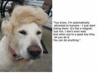 """Presenting, Dogald Trump.: """"You know, I'm automatically  attracted to humans I just start  licking them. It's like a magnet.  Just lick. I don't even wait.  And when you're a good boy they  let you do it.  You can do anything."""" Presenting, Dogald Trump."""