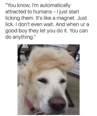 """You can do anything when you're a good boy 😈: """"You know, I'm automatically  attracted to humans I just start  licking them. It's like a magnet. Just  lick. don't even wait. And when ur a  good boy they let you do it. You can  do anything."""" You can do anything when you're a good boy 😈"""
